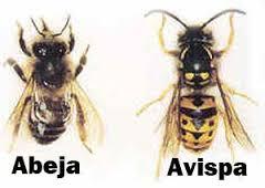 abeja avispa Control y exterminación de insectos hormigas arañas avispas chinches