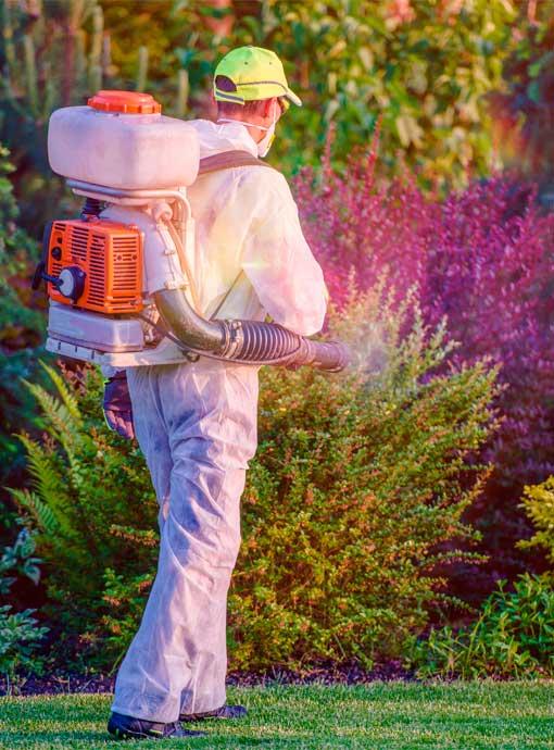 control de plagas secopla madrid Control prevención de plagas empresas domicilios particulares eliminacion