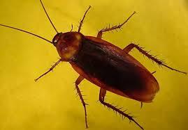prevencion de plagas cucarachas Detección mantenimiento control y prevención de plagas empresa Madrid