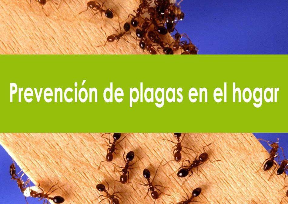 ¿Cómo prevenir las plagas en tu hogar?. Control de plagas en los hogares.