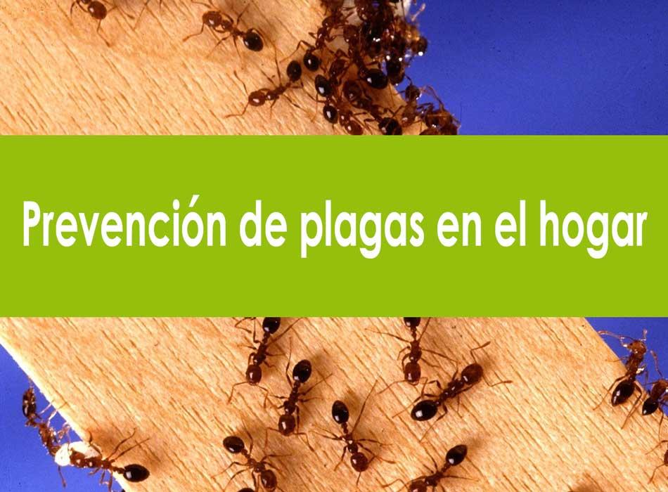control prevencion plagas