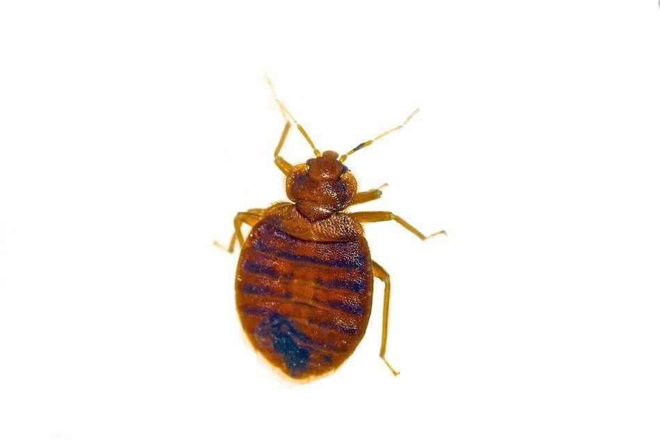 control plagas Madrid 0005 Control y exterminación de insectos hormigas arañas avispas chinches