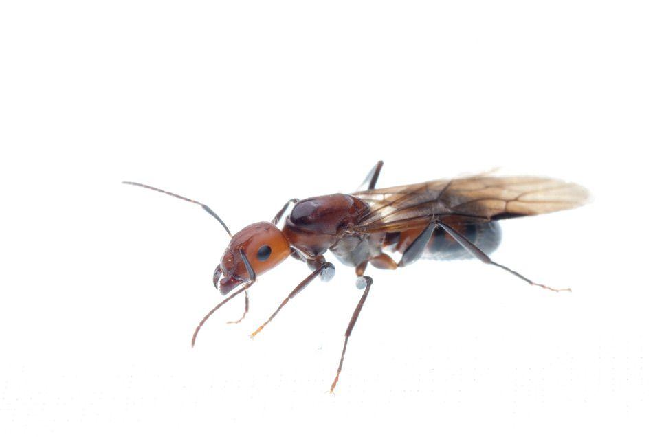 control plagas Madrid 0006 Control y exterminación de insectos hormigas arañas avispas chinches