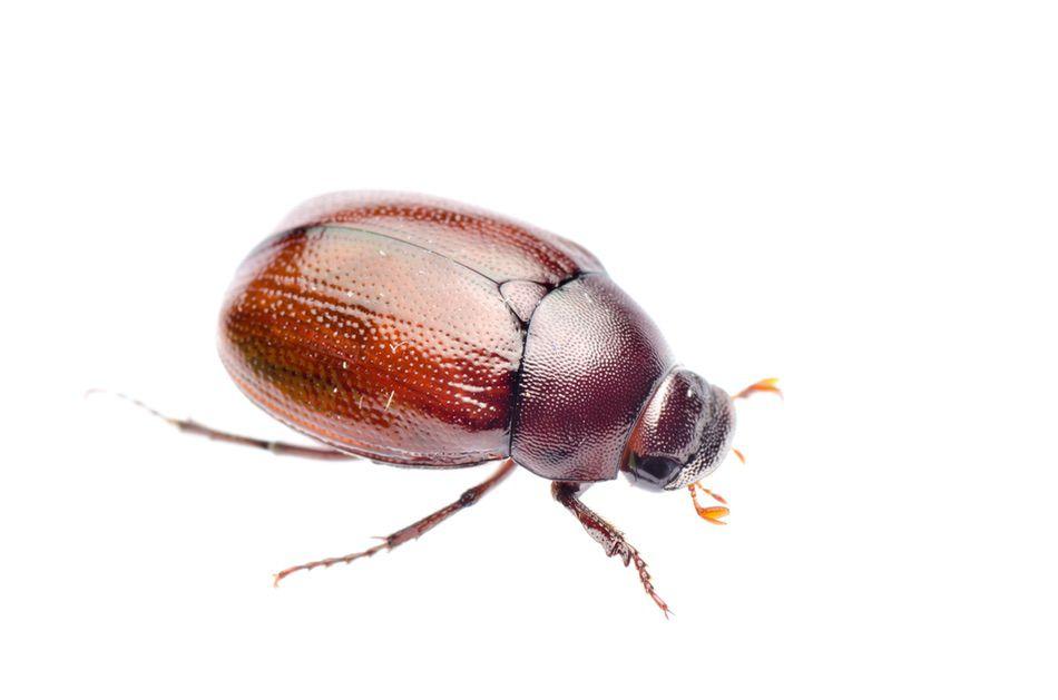 control plagas Madrid 0009 Control y exterminación de insectos tela lana y tejidos polillas escarabajos