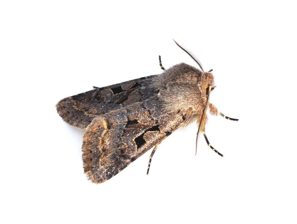 control plagas Madrid 0014 Control y exterminación de insectos tela lana y tejidos polillas escarabajos