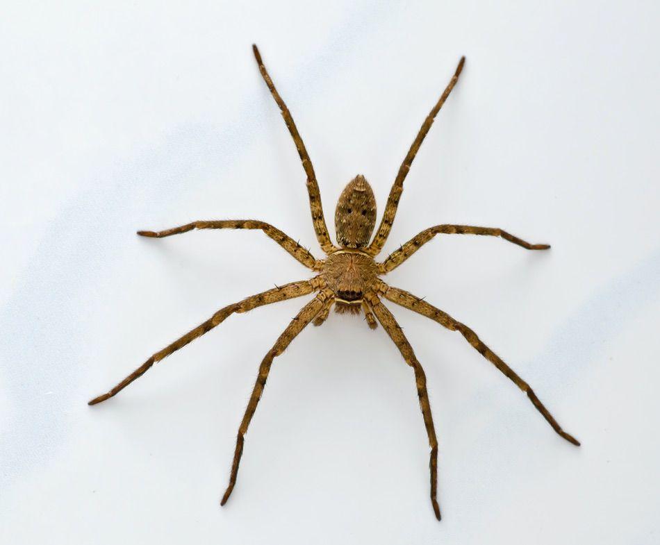 control plagas Madrid 0015 Control y exterminación de insectos hormigas arañas avispas chinches
