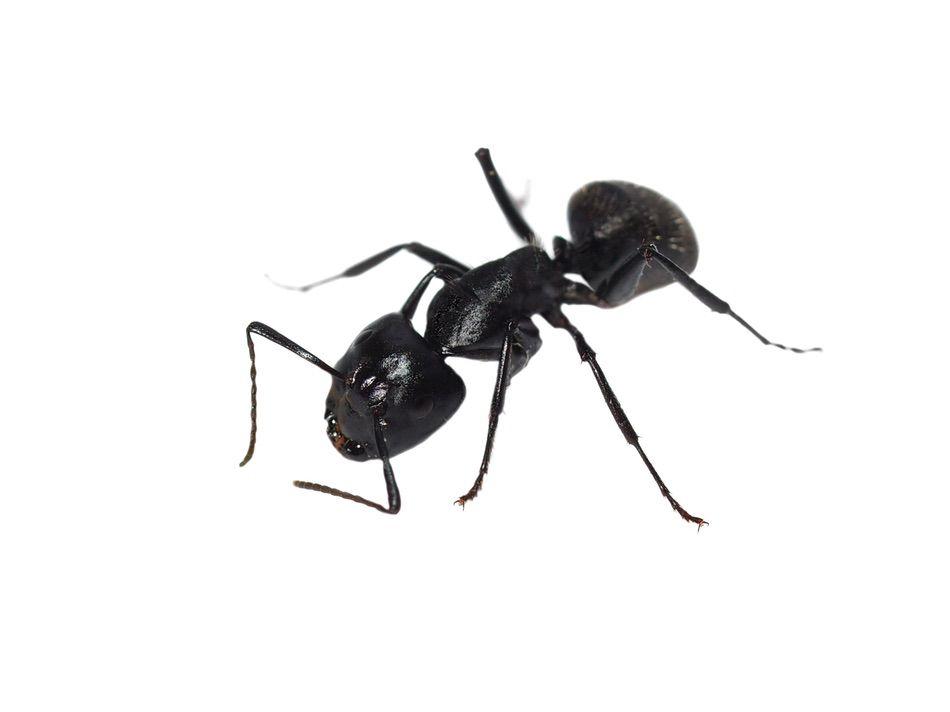 control plagas Madrid 0019 Control y exterminación de insectos hormigas arañas avispas chinches